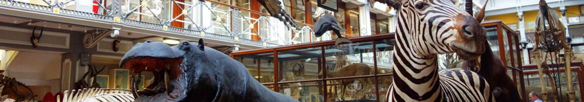 website-event-dcu-natural-history-museum